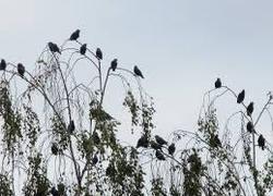 Normal_vogels