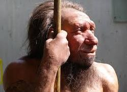 Normal_neanderthaler